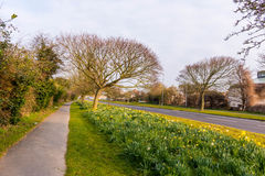 Sunrise on road side. A typical day of spring, on the edge of a street, in England Stock Image