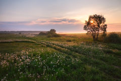 Sunrise in a rural field Stock Photo