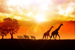 Sunrise Safari Royalty Free Stock Photos