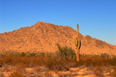 Sunrise Saguaro Stock Images