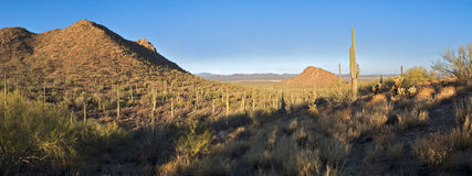 Sunrise in Saguaro National Park Royalty Free Stock Photo