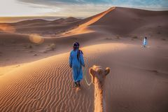 Sunrise in the Sahara Desert, as a camel is led through golden sand dunes by two nomadic tribesmen. royalty free stock photo