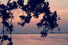 Sunrise at Sanibel. A silhouette of a tree just prior to sunrise on Sanibel Island Florida Stock Photography