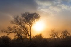 Sunrise in Savannah. Sunrise and mist in Kruger National Park, South Africa Stock Image