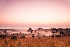 Sunrise at Savannah of Thailand Stock Photography