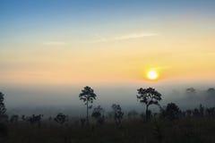 Sunrise sawanna Royalty Free Stock Photography