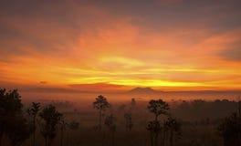 Sunrise sawanna Royalty Free Stock Image