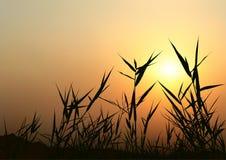 Sunrise Scene Stock Image