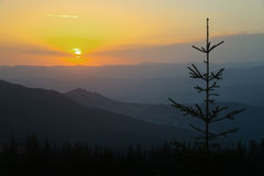 Sunrise scene in mountains with fir in foreground Stock Images