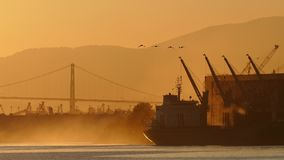 Sunrise Scene Of Ship In The Bay. Large ship docked near suspension bridge with geese flying past in the evening stock footage