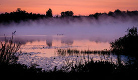 Misty Morning Lake Scene with Duck Family. This sunrise scene shows the morning fog on a lake in Michigan with a duck family, weeds and flowers. Mostly stock image