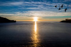 A sunrise in the sea with birds flying. A sunrise in the sea with the silhouette of birds flying Stock Photography