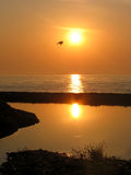 Sunrise at the sea. Flying bird Royalty Free Stock Photo