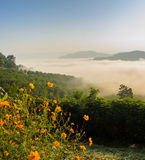Sunrise with sea of fog above Mekong river in Thailand Royalty Free Stock Images