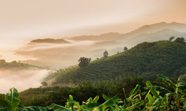 Sunrise with sea of fog above Mekong river in Thailand Stock Photo