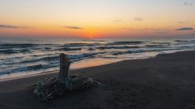 Sunrise on the sea, old wood snag on shore. Mood stock image