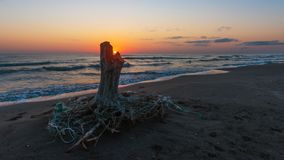 Sunrise on the sea, old wood snag on shore. Mood royalty free stock images