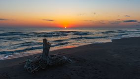 Sunrise on the sea, old wood snag on shore. Mood stock images
