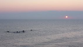 Sunrise Sea Scenery. Sunrise sea scenery with sun in sky and tops of underwater rocks above water stock video