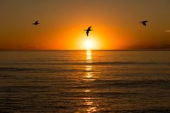 A sunrise in the sea with birds flying. A sunrise in the sea with the silhouette of birds flying Royalty Free Stock Images