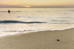Sunrise sea turtle Royalty Free Stock Image
