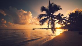 Sunrise sea view and tropical island beach with palm trees. Punta Cana Dominican Republic.  stock video