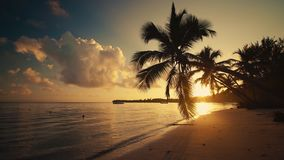 Sunrise sea view and tropical island beach with palm trees. Punta Cana Dominican Republic.  stock footage