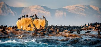 Sunrise at Seal Island. South Africa royalty free stock images