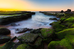 Sunrise seascape and green seaweed Stock Photography