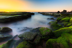 Sunrise seascape and green seaweed Royalty Free Stock Photo
