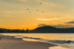 Sunrise Seascape with Seagull Silhouettes in Flight. Taken at Umina Beach, Central Coast, NSW, Australia Royalty Free Stock Image