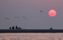 Sunrise on seashore with flying birds. In Kuakata, Bangladesh Stock Photography