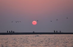 Sunrise on seashore with flying birds. In Kuakata, Bangladesh Stock Photos