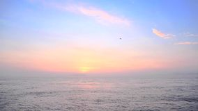 Sunrise at the seashore with seagulls flying stock video