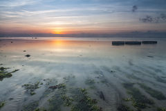 Sunrise at Seaweed Beach, Bali. This was shot in a beach that consider as seaweeds farm, located in Bali Island, Indonesia. Rows of seaweeds underneath the water Stock Photography