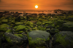 Sunrise on seaweed!. I took this when visiting a small village in Phu Yen provine - one of the most beautiful provinces in Vietnam Royalty Free Stock Photo