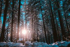 Sunrise seen through forest trees Royalty Free Stock Photo