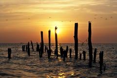 Sunrise Serenade Royalty Free Stock Photo