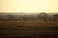 Sunrise Serengeti,Tanzania Royalty Free Stock Image