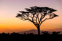 Sunrise in the Serengeti, Tanzania Stock Images