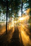 Sunrise Shade of a Forest Royalty Free Stock Images