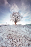 Sunrise shines through branches of winter oak. Sunlight breaks through the winter oak tree with beautiful sky Royalty Free Stock Image