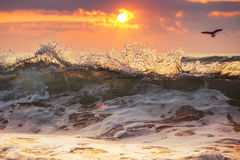 Sunrise and shining waves Stock Images