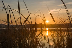 Sunrise on a shore Stock Photography