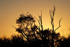 Sunrise Silhouette. Sunrise in the bushveld stock photos