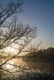 Sunrise silhouette barren branches Royalty Free Stock Photos