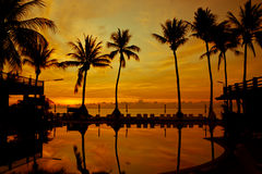 Sunrise with silhouette palm trees Royalty Free Stock Photo