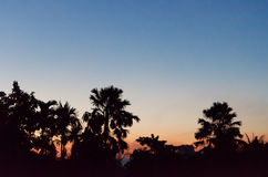 Sunrise silhouette. And tree background Stock Photography