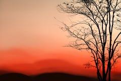 Sunrise and silhouette tree on beautiful colors sky at Phukradue Stock Image