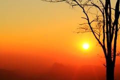 Sunrise and silhouette tree on beautiful colors sky. Stock Photo